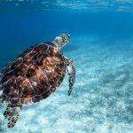 4 Things to Do at Malindi Marine National Park